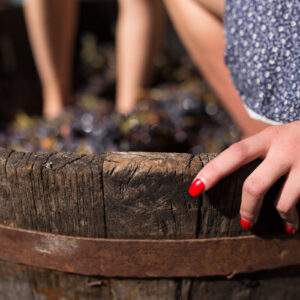 CHIANTI WINES… UNDER THE TUSCAN SUN ! – Wine Tasting Bled